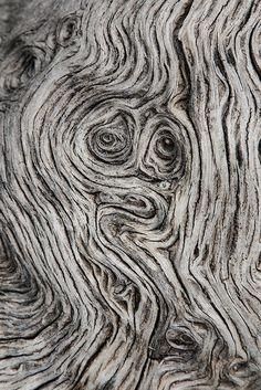 Un tronco seco nos ofrece mil posibles interpretaciones de sus surcos