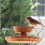 love this...bird bath made from terracotta pot/catch plates and a wire basket.