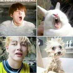 Memes y cómics yaoi - Mi Animal Interior Bts Funny Videos, Bts Memes Hilarious, Foto Bts, Bts Taehyung, Bts Jimin, Taekook, Bts 2013, Fanfic Kpop, Vkook Memes