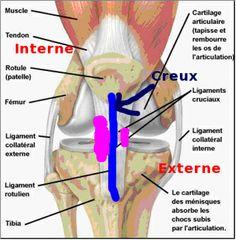 Posterolateral corner anatomy