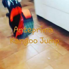 Anteprima Kangoo Jump.... Meravigliosiiii Presto per voi😍❤ Grazie @kangoojumpsitalia