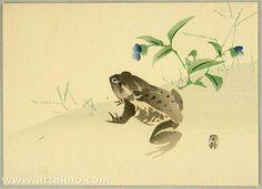 Artist: Suzuki Kason Title: Frog Date: Ca. 1910s. Details & Prices: Suzuki Kason: Frog - Artelino Source: artelino - Japanese Prints