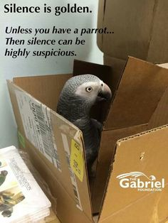 Silence is golden... unless you have a parrot