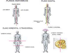 -Medial -Eje transversal:divide al cuerpo en una parte superior y otra inferior , contiene los ejes transversal y Sagital. -Plano Frontal o Coronal -Plano sagital: DIVIDEN AL CUERPO EN 2 PARTES, UNA IZQUIERDA Y OTRA DERECHA