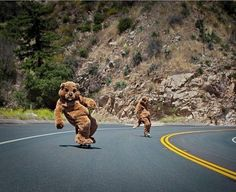 Bears sometimes skate to