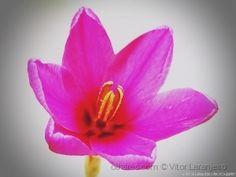 Flores do Meu Jardim.. (Feliz Feriado)