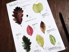 Obraťme list // Z lesa