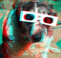 3D Dog   3D anaglyph red blue (or cyan) glasses to view    Like, Repin, Follow :)