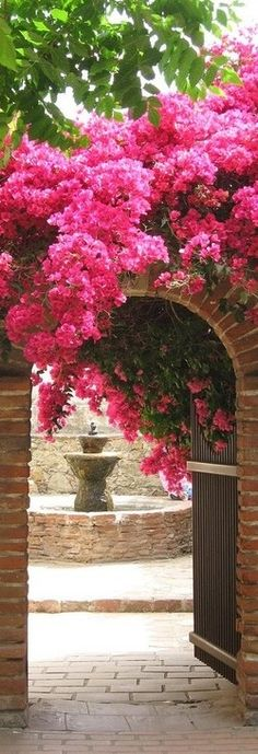 I love Bougainvillea. If I lived in the tropics my garden would be full of Bougainvillea Beautiful Flowers, Beautiful Places, Beautiful Life, My Secret Garden, Garden Gates, Garden Entrance, Garden Archway, House Entrance, Grand Entrance