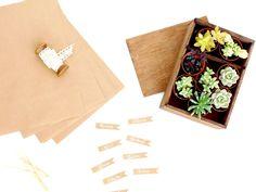 Aprende a poner bonitas suculentas para bodas. Regala estas mini plantas a tus invitados y no será el típico recuerdo que se guarda en el cajón de sastre.