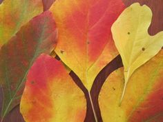 How to Preserve Pretty Fall Leaves with Wax Paper | DIY Network Blog: Made + Remade | DIY