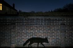 "'Shadow Walker', winner of European Photographer of the Year 2015,  Richard Peters  ""Using a camera trap was the only way to capture the desired photo, meaning I had to pre-visualise the photo and set the camera accordingly. With all those elements needing to come together, it was a frustrating photo to take, with many failed attempts before it all finally came together."""