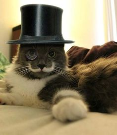 Top hat Kitty - Should You get Health Insurance for your Pet? #Cat http://shrsl.com/?~7hbo