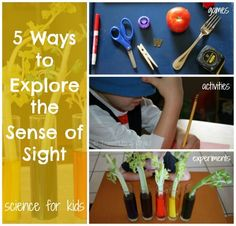 5 Ways to Explore the Sense of Sight ~  As part of our All About Me unit study we've been learning about our five senses.  We love sensory play, and this week we have been isolating each sense and focusing on stimulating one at a time.  I chose five activities that centered on the sense of sight.  The first two were demonstrations about the importance of sight.