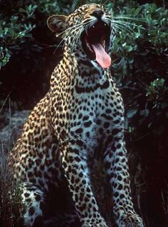 Signification du Varan en rêve - ©Varan de Komodo - Thoiry-1981 ...