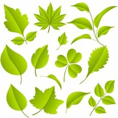 Vine Leaf Vectors, Photos and PSD files | Free Download
