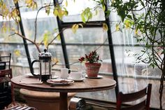Conservatory, Coffee, Plants, Table