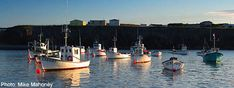 St John's Newfoundland Tourist and Visitor Tips Games Today, St John's, Newfoundland, Fishing Tips, Fishing Boats, Improve Yourself, The Neighbourhood, Park, Travel