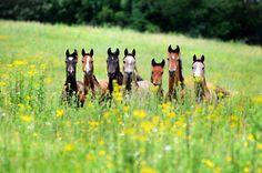 Wild flowers and wild horses...