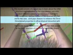How to Build a DNA model with Pipe Cleaners - YouTube (Module #5 extra project)