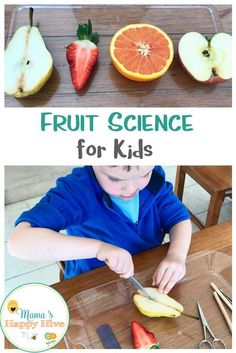 This is a fruit science for kids lesson that identifies the various structures of the fruit, compares and contrasts different fruit seeds, includes dissecting work, matching work, and a lovely spiritual lesson at the end. Science Activities For Toddlers, Science For Kids, Wellness Activities, Fruit And Veg, Fruits And Vegetables, Fruit Fruit, Experiment, Montessori Science, Montessori Elementary