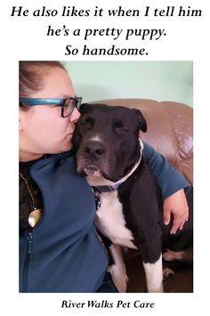 Shh don't tell them, they're all pretty puppies! #prettypuppy #cute #dogs #pitbull #staffie #petsitter #tuxedo