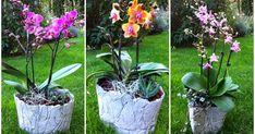 Betonschalen, Meyers Pflanzenkulturen, Orchideen, Beton