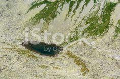 Pond - Rumanowy Staw (Rumanovo pleso) royalty-free stock photo