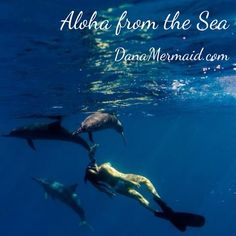 www.DanaMermaid.com #danamermaid #mermaid #dolphins Photography by @Sarah Chintomby Lee