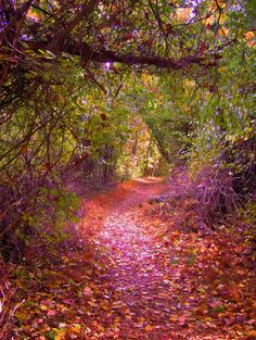 Shenandoah National Park by latur, path, autumn, forest uploaded by Daily Chronicle