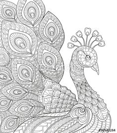 Vektor: Peacock. Adult antistress coloring page. Black and white hand drawn doodle for coloring book