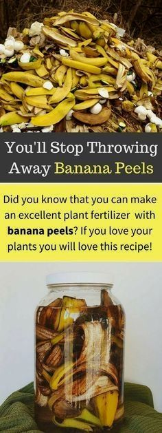 Bananas are mineral rich and recycling the peels back into your garden saves money and returns these nutrients to the soil where they can benefit other plants. Bananas are rich in minerals including…MoreMore #GardeningTips