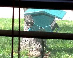 This migrating visitor from Central and South America is passing through Franklin late April into May on its way to nesting areas northward.  Related to Cardinals, this male Rose-breasted Grosbeak can sing a robin-like song at an operatic level.  They don't always sing on migration, but one was heard last year singing all day in the trees of a Franklin yard.
