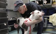 "Hero Grooms Shelter Dogs For Free To Find Them New Homes - Imhof is now in business for himself as a groomer, but he also offers his time for free to the Animal Care Centers of NYC animal shelters in Manhattan and Brooklyn. To them, he's ""Mark The Dog Guy."""