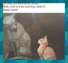 Best Memes of the Week – Weekly Wackyy Meme Dump 3 Photos) – Page 2 of 4 – Wackyy – Humor Funny Cat Memes, Funny Cats, Funny Animals, Memes Humor, Funny Horses, Hilarious Quotes, 9gag Funny, Funny Captions, True Memes