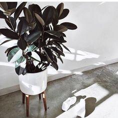 Even een inspiratie foto. Ik ben fan van deze plantenpot. Voor in me eigen huis. Misschien een keertje maken. Kan niet moeilijk zijn toch? ---------------------------------------------------------------------------------------- #interior4all #interior #interieur #interior4you #industrial #interior123 #stylen #stylist #styling #style #lifestyle #living #loft #stoerwonen #wonen #accessoires #woonaccessoires #woondeco #woonkamerinspiratie #woonkamerverandering