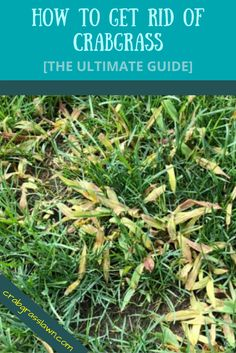 The ultimate guide on how to get rid of crabgrass in your lawn. See the most effective natural ways to kill crabgrass, control it and remove it for good. Lawn Care Schedule, Lawn Care Tips, Lawn And Garden, Garden Path, Garden Tips, Garden Ideas, Organic Lawn Care, Lawn Repair, Bermuda Grass
