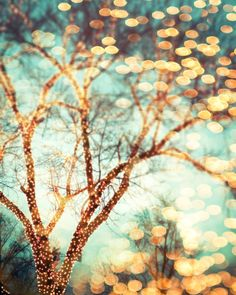 Winter photography December trees nature photography print holiday lights empty branches Christmas photo 8x10 photograph. $30.00, via Etsy.