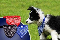 Dog Bandana Collar - 3 Colours!