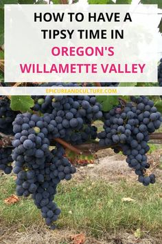 Things to do in Oregon | Visiting a vineyard in Oregon | Willamette Valley