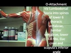 What do the muscles do? Watch to find out.