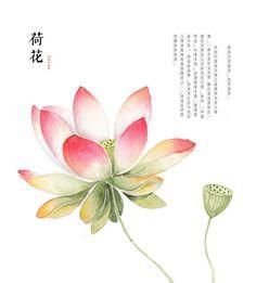 hand drawing watercolor plants--lotus by GaloShining on DeviantArt
