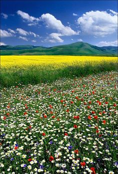 Flowers Nature, Wild Flowers, Beautiful Flowers, Beautiful Places, Beautiful Pictures, Landscape Photography, Nature Photography, Spring Scenery, Wild Flower Meadow