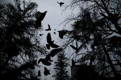 Miré hacia la Penitenciaría y vi cómo las palomas volaron en desbandada hacia todas las direcciones. Un rumor acompañó el estampido y de nuevo vino el silencio agazapado, hipócrita..