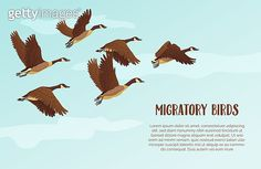 Migratory birds background with text