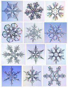 Fractals snowflakes