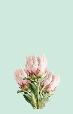 'Proteas' iPhone Case by FayeLangoulant Pink Wallpaper Iphone, Iphone Wallpapers, Wallpaper Backgrounds, Iphone Case Covers, Mint Green, Color Combinations, Finding Yourself, Bouquet, Happy