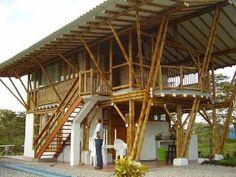 La Guadua tiene una larga historia de uso para diversos fines, tales como alimentación, vivienda, muebles,etc. El bambúGuaduaha estado sirviendo a la huma