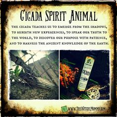 Cicada Tattoo, Animal Meanings, Spiritual Animal, Animal Spirit Guides, Animal Medicine, Meant To Be Quotes, Witchcraft For Beginners, Wicca, Recipes