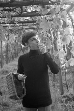 Audrey Hepburn Tasting Grapes in her Italian Vineyard , 1955 Audrey Hepburn Born, Audrey Hepburn Photos, Old Hollywood Actresses, British Actresses, Divas, Gene Kelly, Golden Age Of Hollywood, Dita Von Teese, Brigitte Bardot